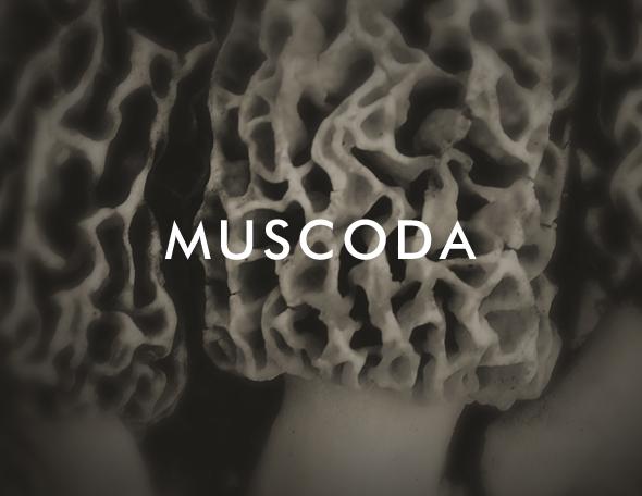 Muscoda